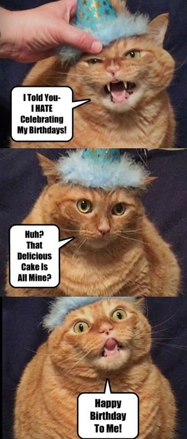 "101 Funny Cat Birthday Memes - ""I told you - I HATE celebrating my birthday! Huh? That delicious cake is all mine? Happy birthday to me!"""