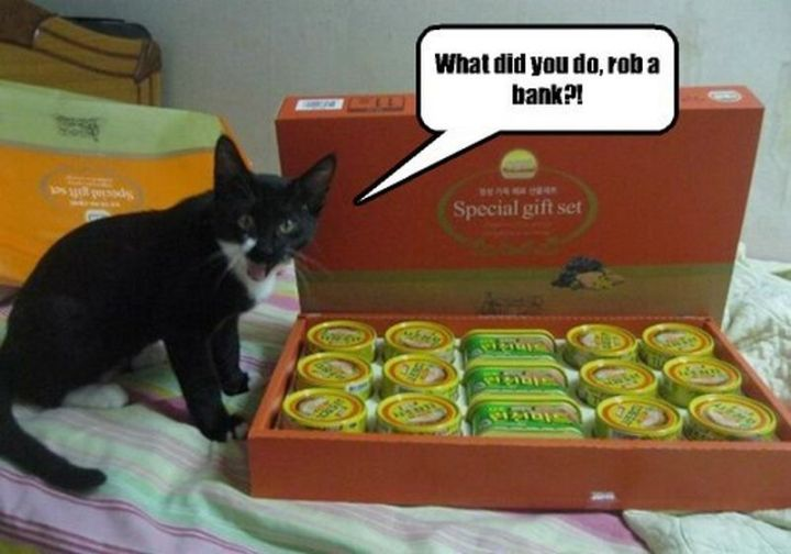 "101 Funny Cat Birthday Memes - ""What did you do, rob a bank?!"""