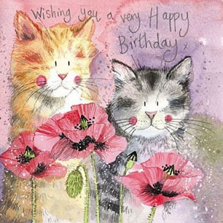 "101 Funny Cat Birthday Memes - ""Wishing you a very Happy Birthday."""