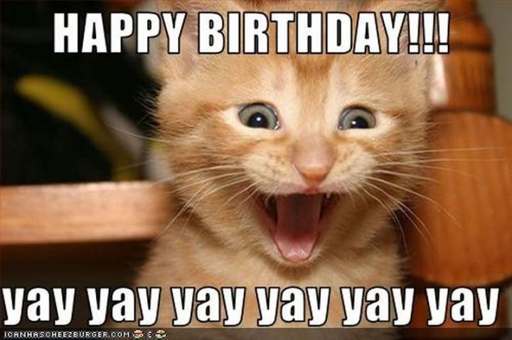 """101 Funny Cat Birthday Memes - """"HAPPY BIRTHDAY!!! yay yay yay yay yay yay."""""""