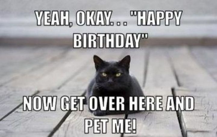 "101 Funny Cat Birthday Memes - ""Yeah, okay...Happy Birthday. Now get over here and pet me!"""