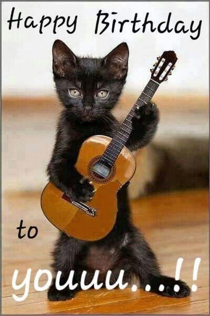 Happy Birthday Cat Images Funny : happy, birthday, images, funny, Funny, Birthday, Memes, Feline, Lovers