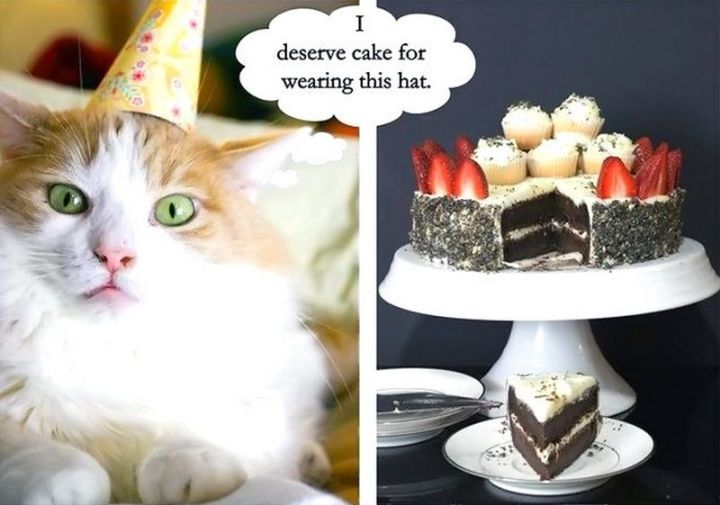"101 Funny Cat Birthday Memes - ""I deserve cake for wearing this hat."""