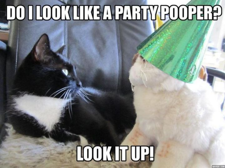 "101 Funny Cat Birthday Memes - ""Do I look like a party pooper? Look it up!"""
