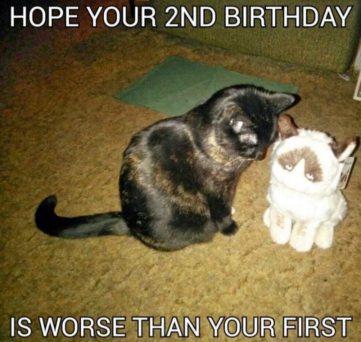 "101 Funny Cat Birthday Memes - ""Hope your 2nd birthday is worse than your first."""