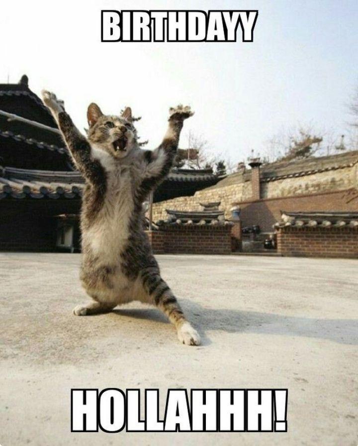 """101 Funny Cat Birthday Memes - """"Birthdayy Hollahhh!"""""""
