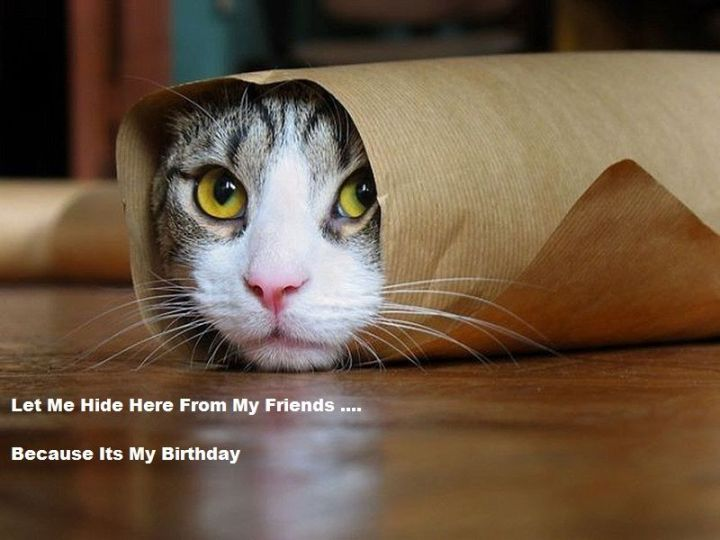 "101 Funny Cat Birthday Memes - ""Let me hide here from my friends...because it's my birthday."""