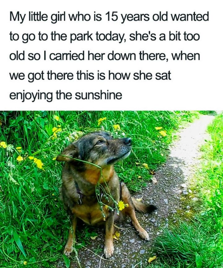 "55 Cute Dog Posts - ""My little girl who is 15 years old wanted to go to the park today, she's a bit too old so I carried her down there. When we got there this is how she sat enjoying the sunshine."""