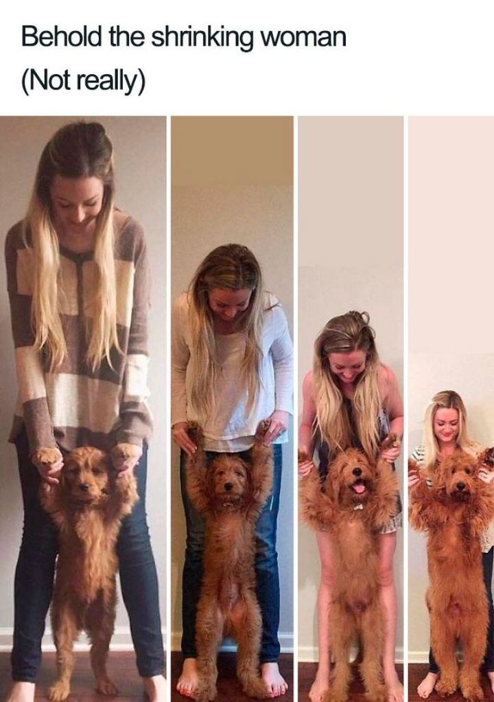 "55 Cute Dog Posts - ""Behold the shrinking woman (not really)."""