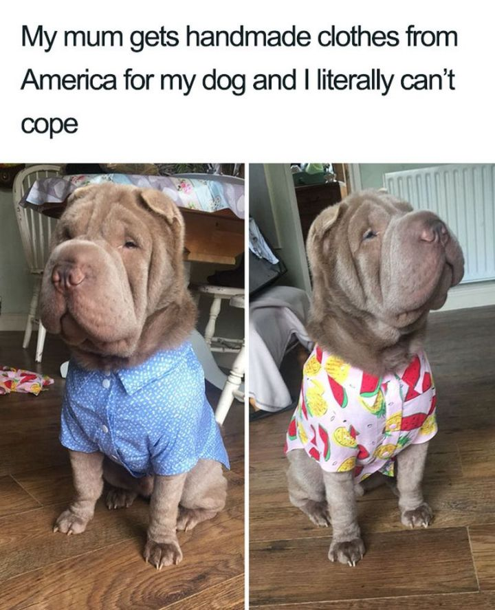 "55 Cute Dog Posts - ""My mum gets handmade clothes from America for my dog and I literally can't cope."""