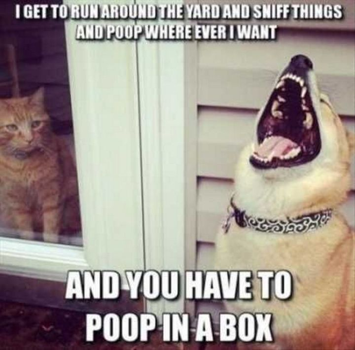 "67 Hilarious Memes - ""I get to run around the yard and sniff things and poop where ever I want and you have to poop in a box."""
