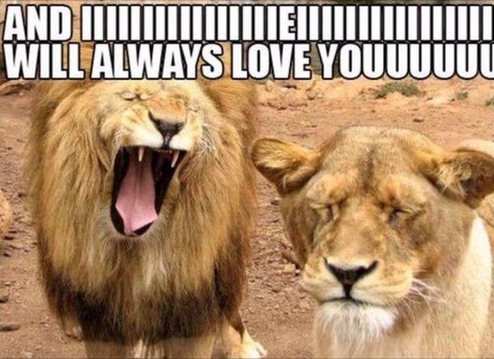 55 Love Memes -
