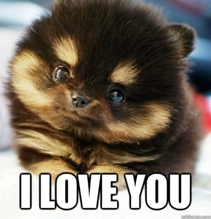 "55 Love Memes - ""I love you."""