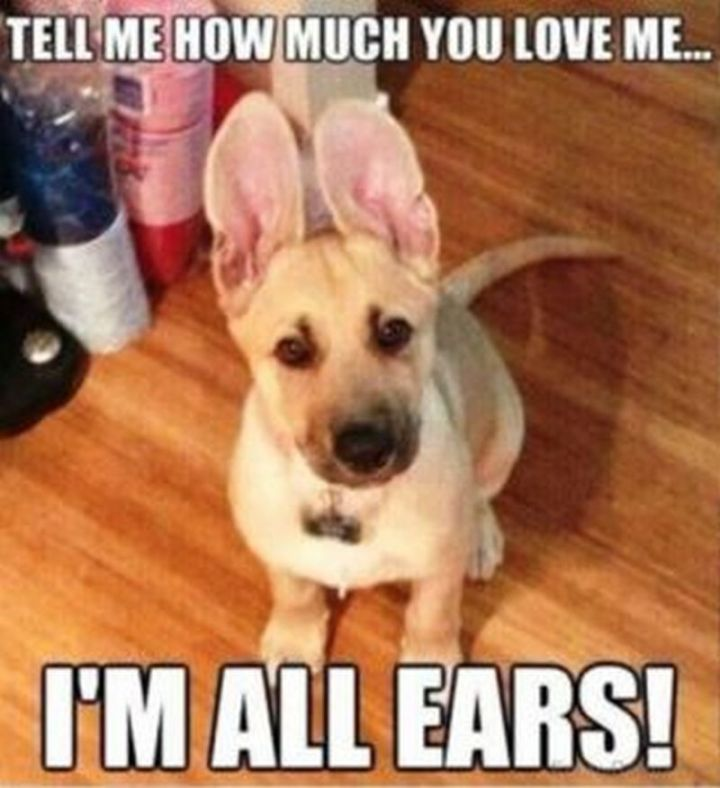 "55 Love Memes - ""Tell me how much you love me...I'm all ears!"""