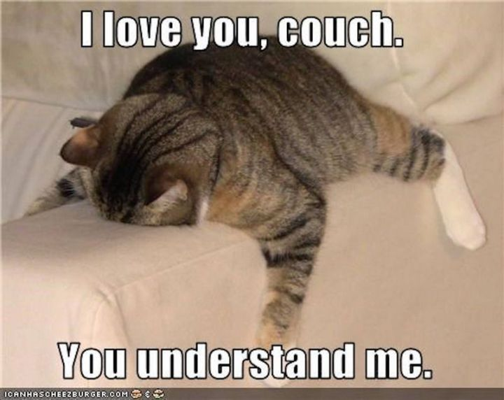 "71 Relationship Quotes - ""I love you, couch. You understand me."""