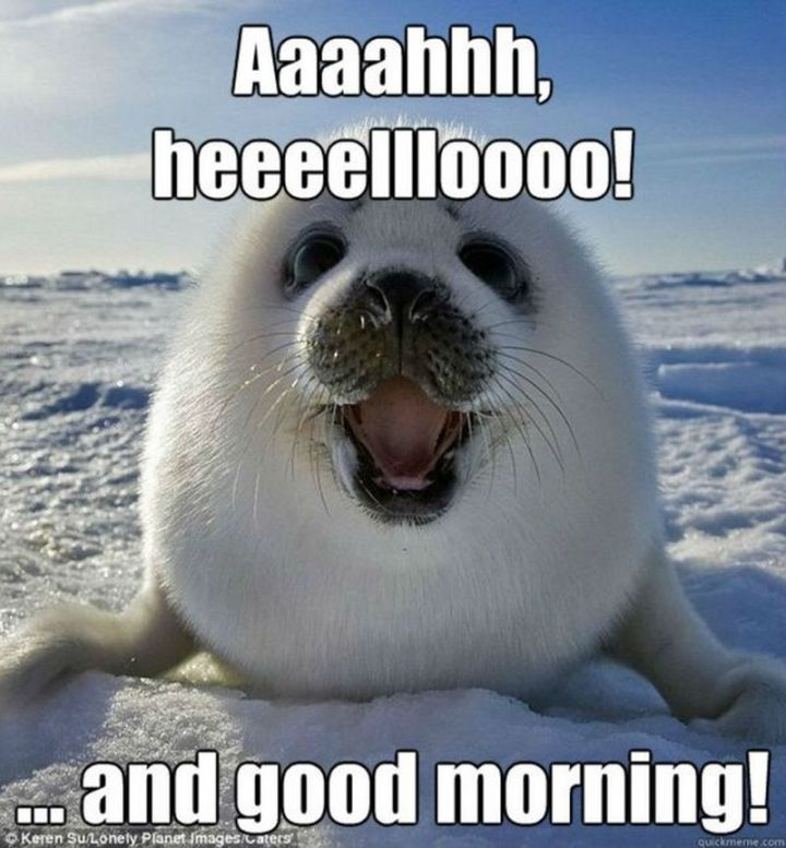"101 Funny Good Morning Memes - ""Aaaahhh, heeeellloooo!...and good morning!"""