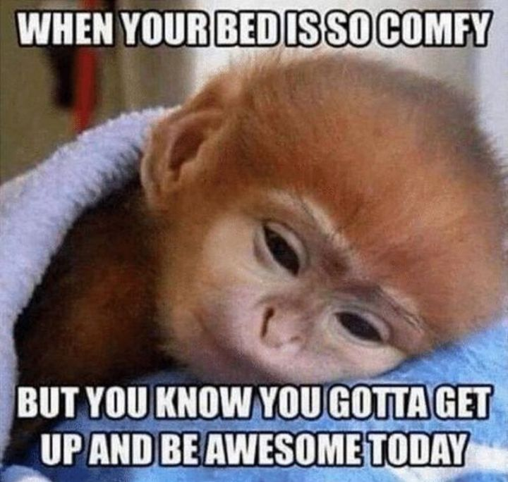 "101 Funny Good Morning Memes - ""When your bed is so comfy but you know you gotta get up and be awesome today."""