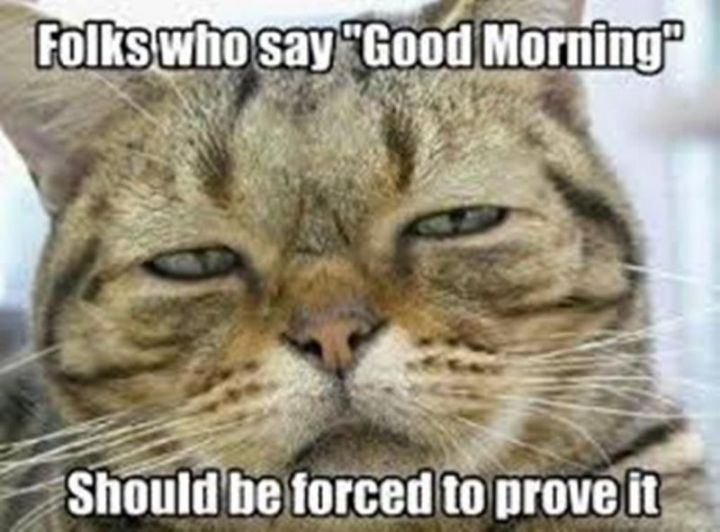 "101 Funny Good Morning Memes - ""Folks who say 'Good Morning' should be forced to prove it."""