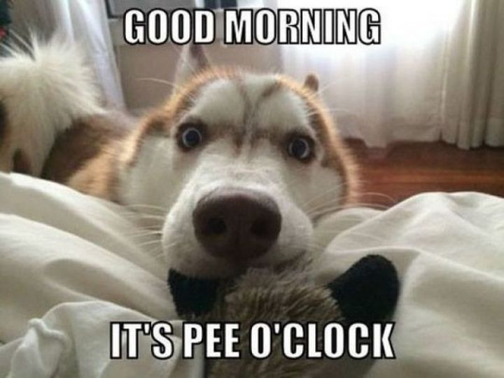 "101 Funny Good Morning Memes - ""Good morning. It's pee o'clock."""