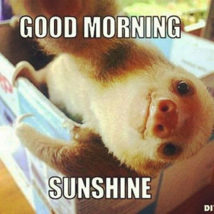 "101 Funny Good Morning Memes - ""Good morning sunshine."""