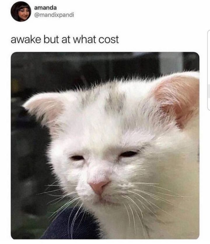 "101 Funny Good Morning Memes - ""Awake but at what cost."""