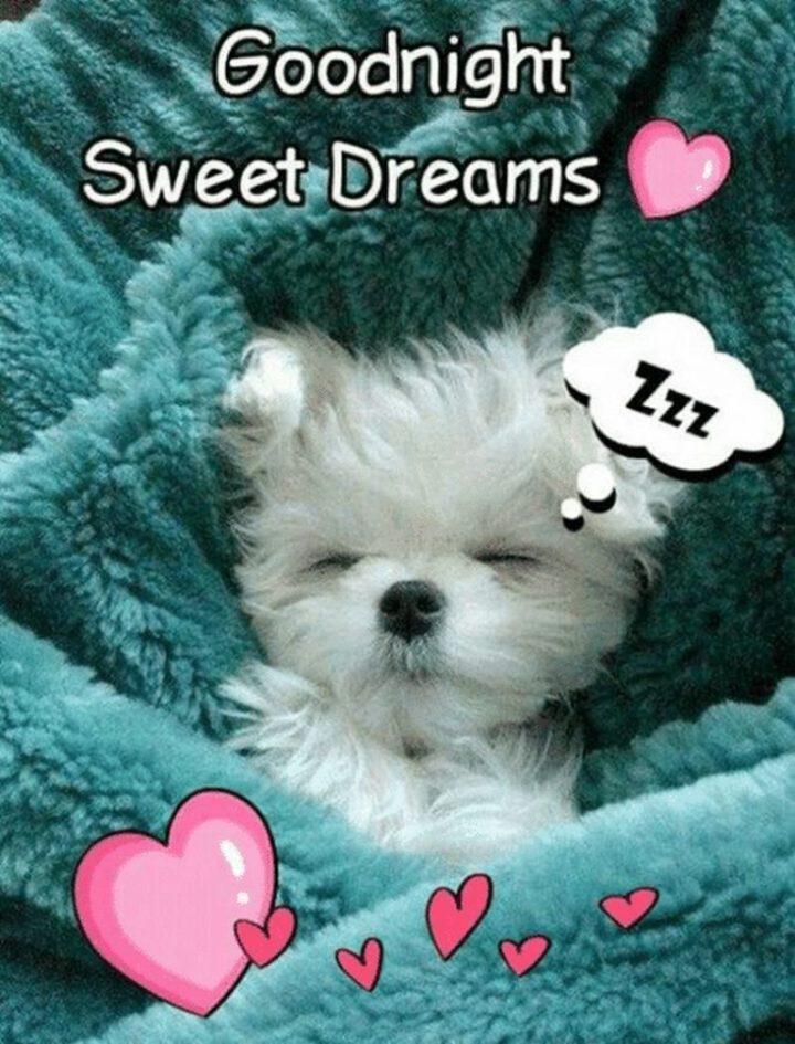 Good Night Meme : night, Night, Memes, Funny, Goodnight, Wishes