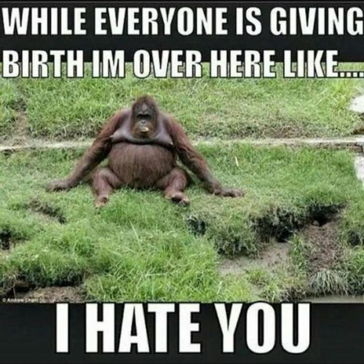 "71 Pregnancy Memes - ""While everyone is giving birth I'm over here like...I hate you."""