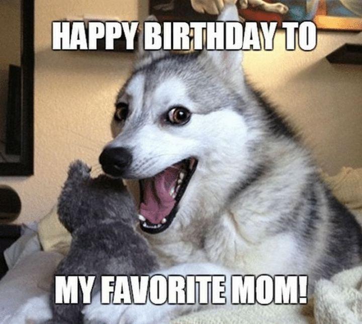 """101 Happy Birthday Mom Memes - """"Happy birthday to my favorite mom!"""""""