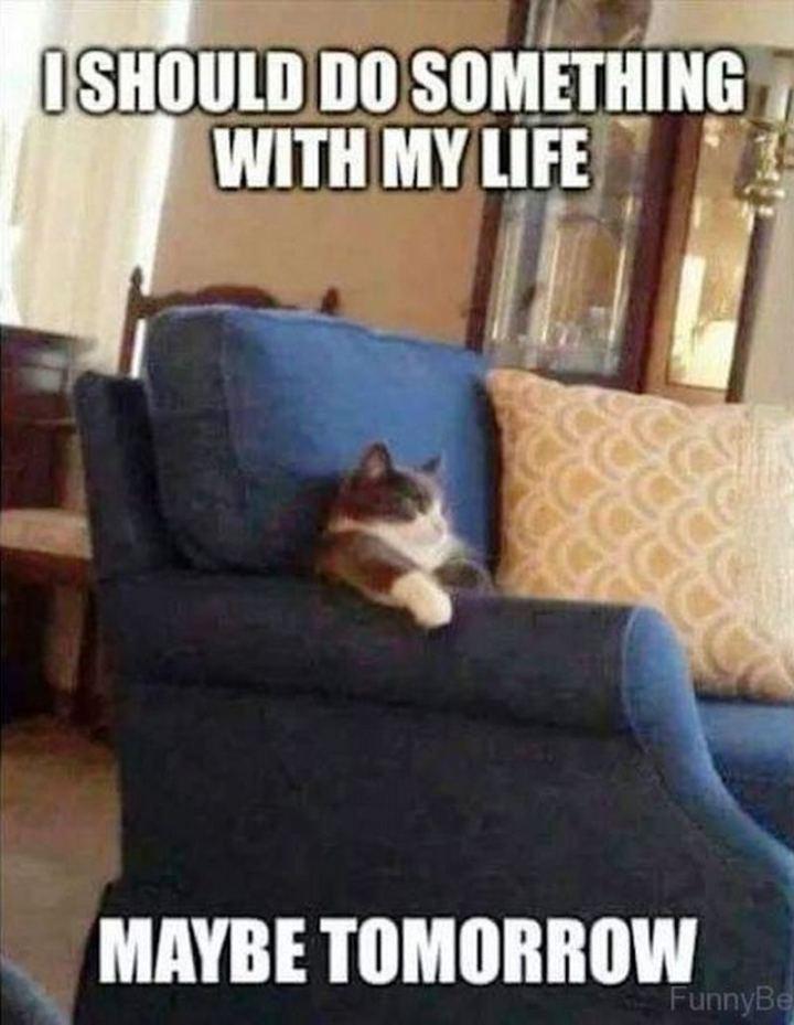 "81 Funny Life Memes - ""I should do something with my life. Maybe tomorrow."""