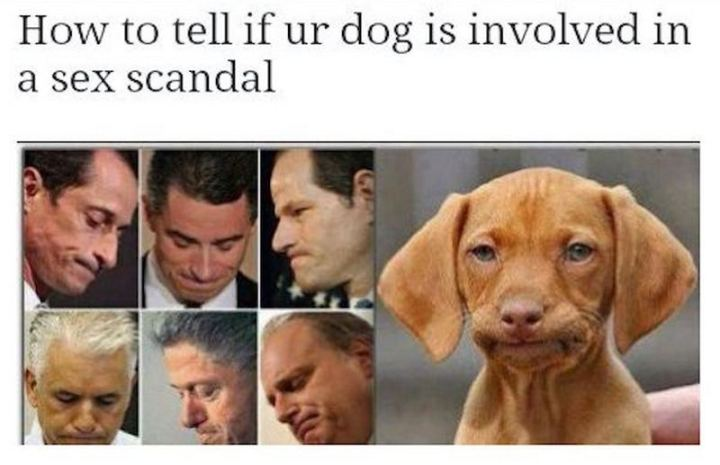 """71 Funny Dirty Memes - """"How to tell if ur dog is involved in a [censored] scandal."""""""