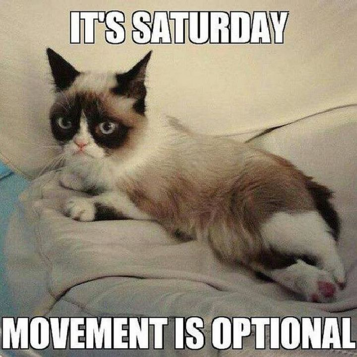 "101 Saturday Memes - ""It's Saturday. Movement is optional."""