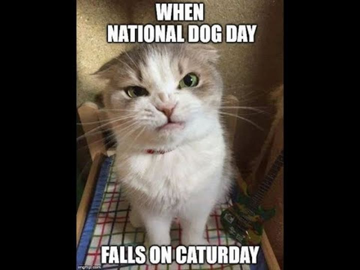 "101 Saturday Memes - ""When national dog day falls on caturday."""