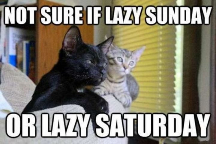 "101 Saturday Memes - ""Not sure if lazy Sunday or lazy Saturday."""