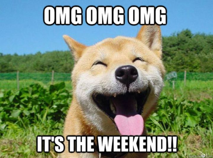 "101 Saturday Memes - ""OMG OMG OMG It's the weekend!!"""