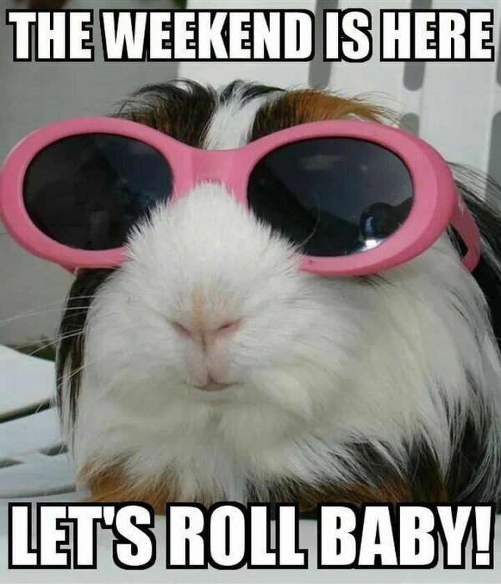 "101 Saturday Memes - ""The weekend is here. Let's roll baby!"""