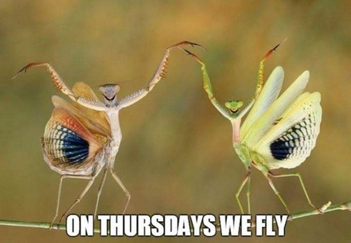 "101 Thursday Memes - ""On Thursdays, we fly."""