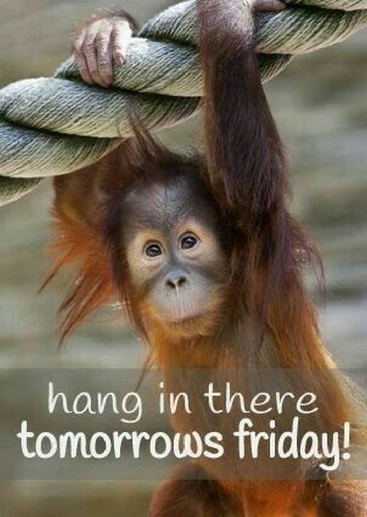 "101 Thursday Memes - ""Hang in there, tomorrow's Friday!"""