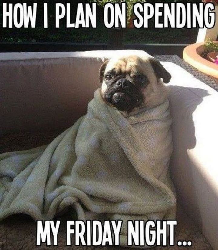 "75 Introvert Memes - ""How I plan on spending my Friday night..."""