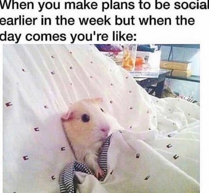 "75 Introvert Memes - ""When you make plans to be social earlier in the week but when the day comes you're like:"""