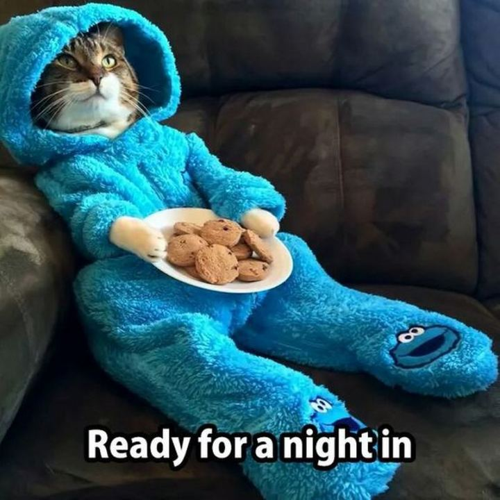 "75 Introvert Memes - ""Ready for a night in."""