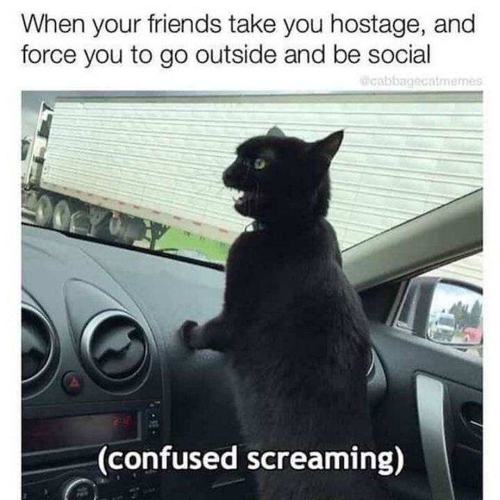 "75 Introvert Memes - ""When your friends take you hostage and force you to go outside and be social: (Confused screaming)."""