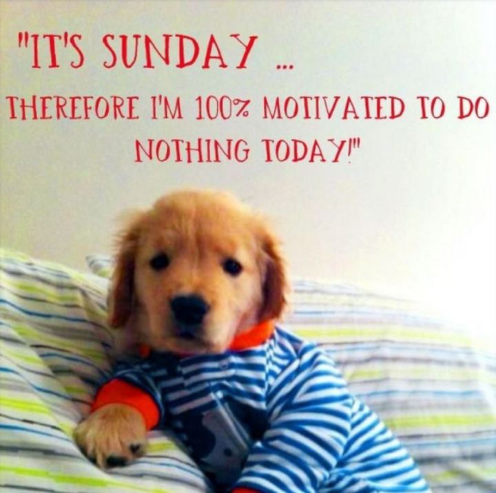 "47 Sunday Quotes - ""It's Sunday, therefore I am 100% motivated to do nothing today!"" - Unknown"