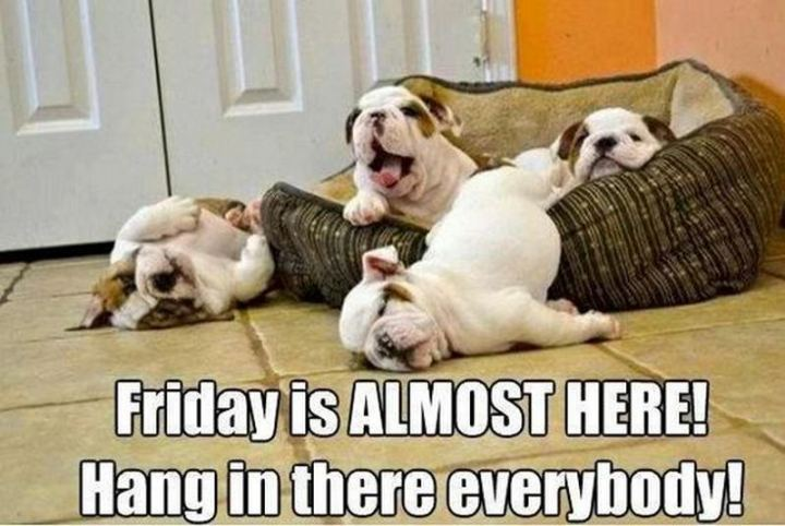 "55 ""Almost Friday"" Memes - ""Friday is ALMOST HERE! Hang in there everybody!"""