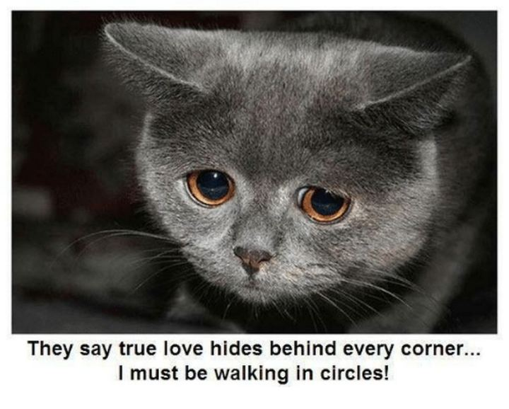 """53 Funny Love Quotes - """"They say true love hides behind every corner, I must be walking in circles."""" - Anonymous"""