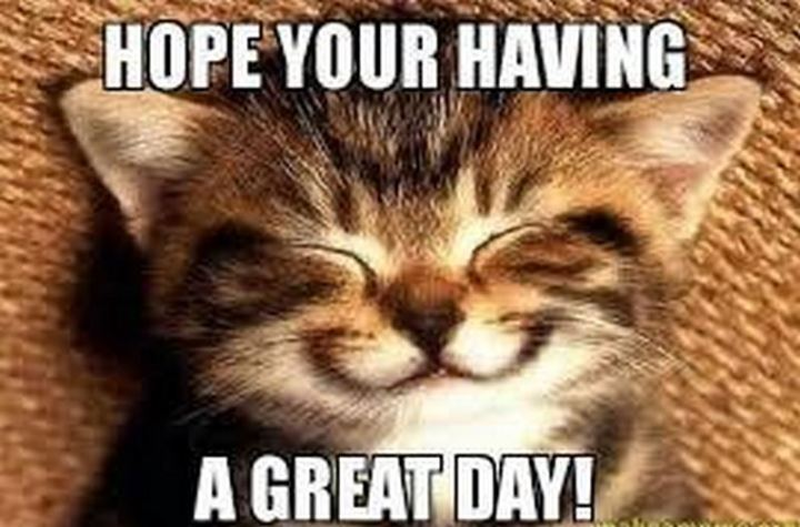 "101 ""Have a Great Day"" Memes - ""Hope you're having a great day!"""