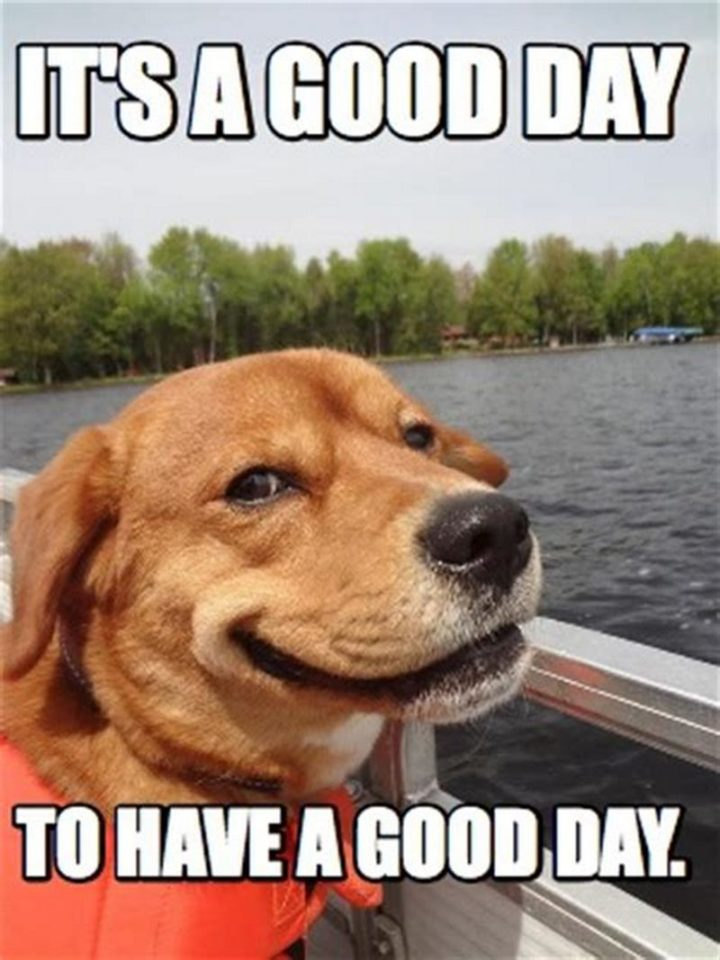 Have A Great Day Meme : great,