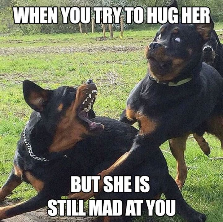 """When you try to hug her but she is still mad at you."""