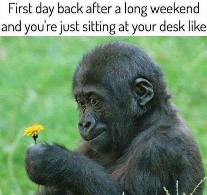 """The first day back after a long weekend and you're just sitting at your desk like..."""