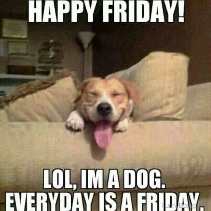 """Happy Friday! LOL, I'm a dog. Everyday is a Friday."""