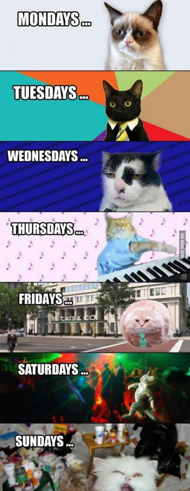 """""""Mondays...Tuesdays...Wednesdays...Thursdays...Fridays...Saturdays...Sundays..."""""""